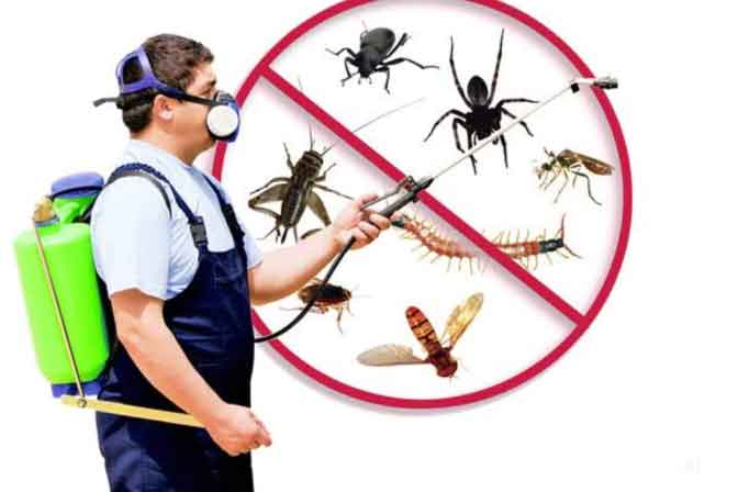 Pest Control Services In Manovikas Nagar
